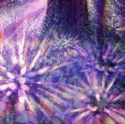 Rainbow grove cover 2